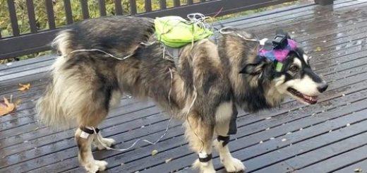 Ученые обучают искусственный интеллект думать и вести себя подобно собаке